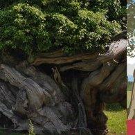 L'arbre, vie et usages