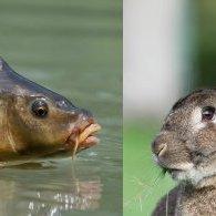 Une carpe et un lapin: quelle histoire!