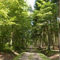 Balade commentée de la forêt de la Comté