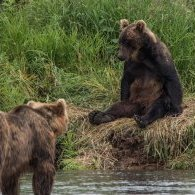 La chronique de l'ours au mois d'août...
