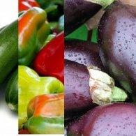 Suprêmes de volaille, crème de Cèpes, légumes tournés et tatin du potager