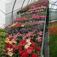 Christelle SALCEDO horticulture
